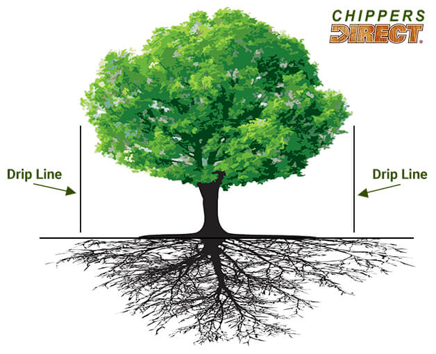 To the Drip Line - How Far to Apply Mulch Beneath a Tree