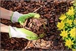 An Introduction to Using Mulch